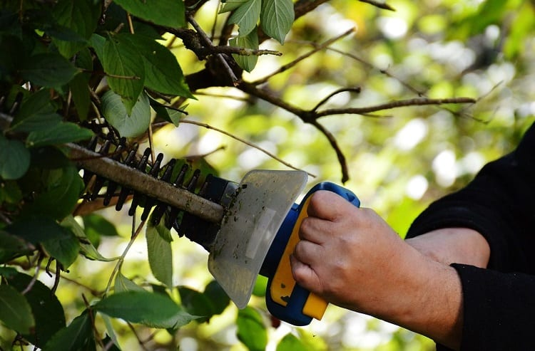 Using Hedge Trimmer