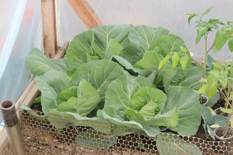 Some Vegetables You Should Start Growing Indoors