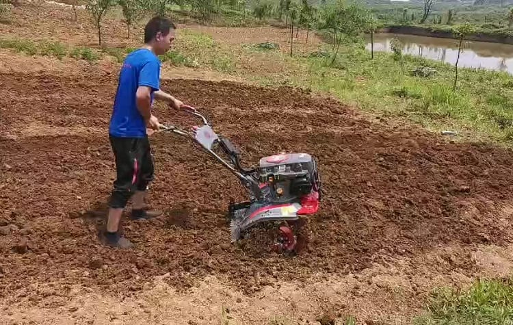 Why You Must Avoid Over-Tilling Your Garden