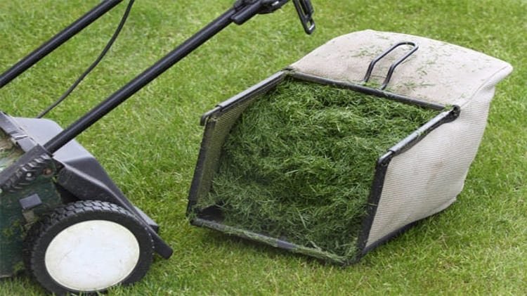 USE YOUR GRASS CLIPPINGS ON VEGGIES
