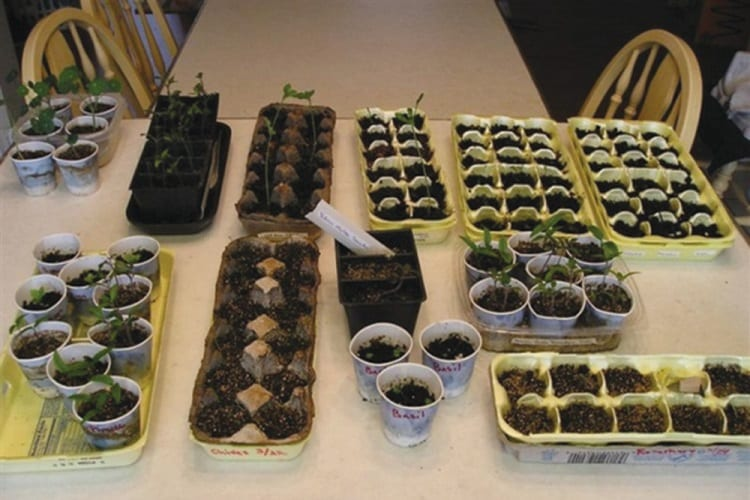 MAKE SURE YOU GROW SEEDLINGS INDOORS