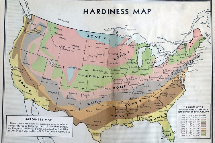 What To Know About Hardiness Zones And Planting Veggies
