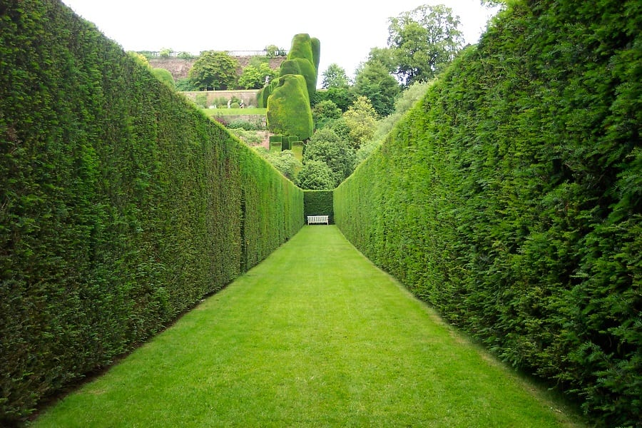 How To Grow A Thick Hedge
