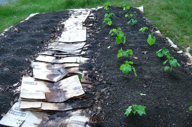 When Can You Start Planting In Your Lasagna Garden?