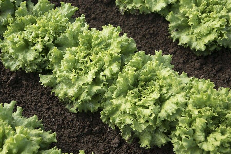 12 Fast Growing Garden Plants