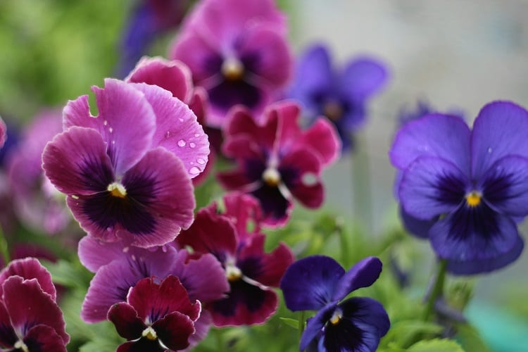 Gardening 101: The Easiest Plants To Grow