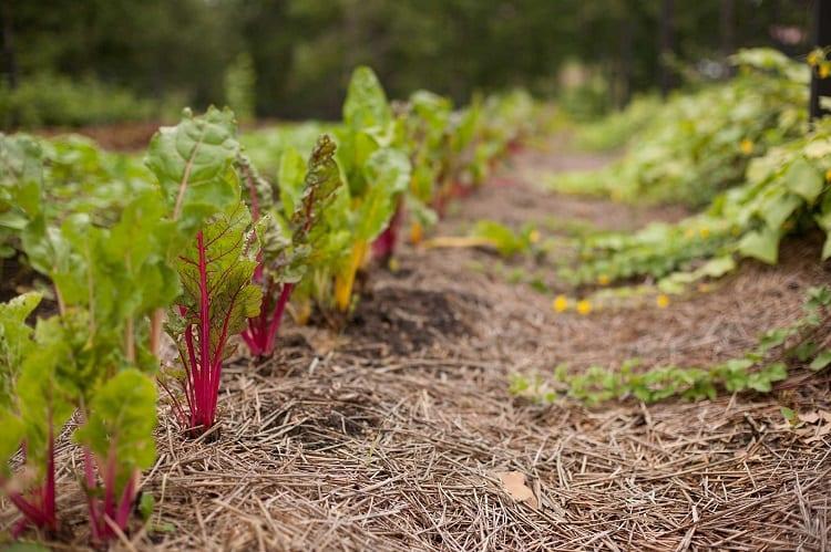 What Veggies To Plant Depending On The Season