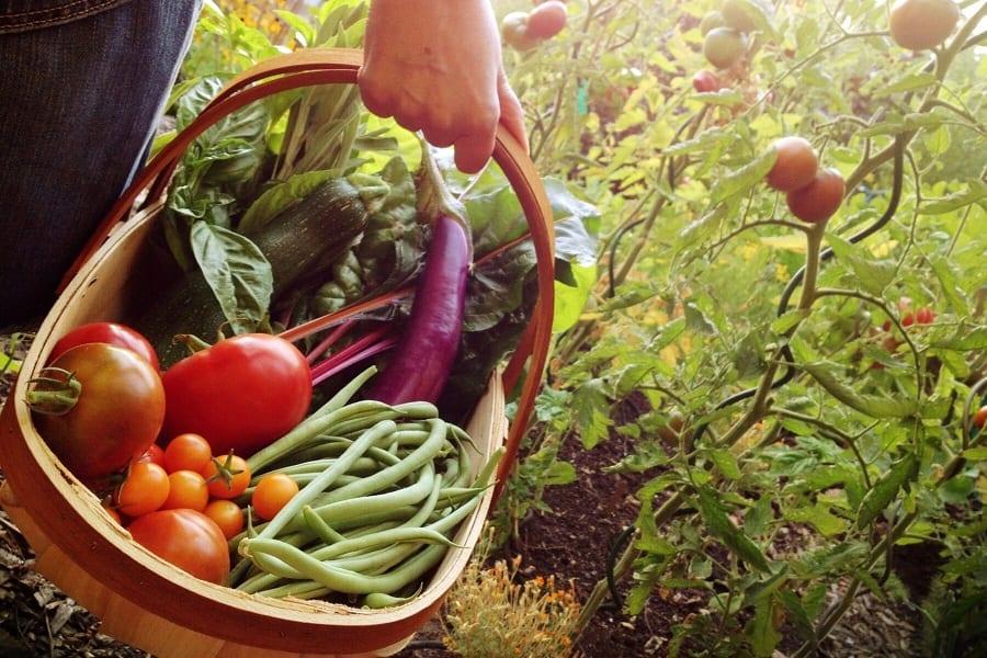 Vegetable Planting Seasons