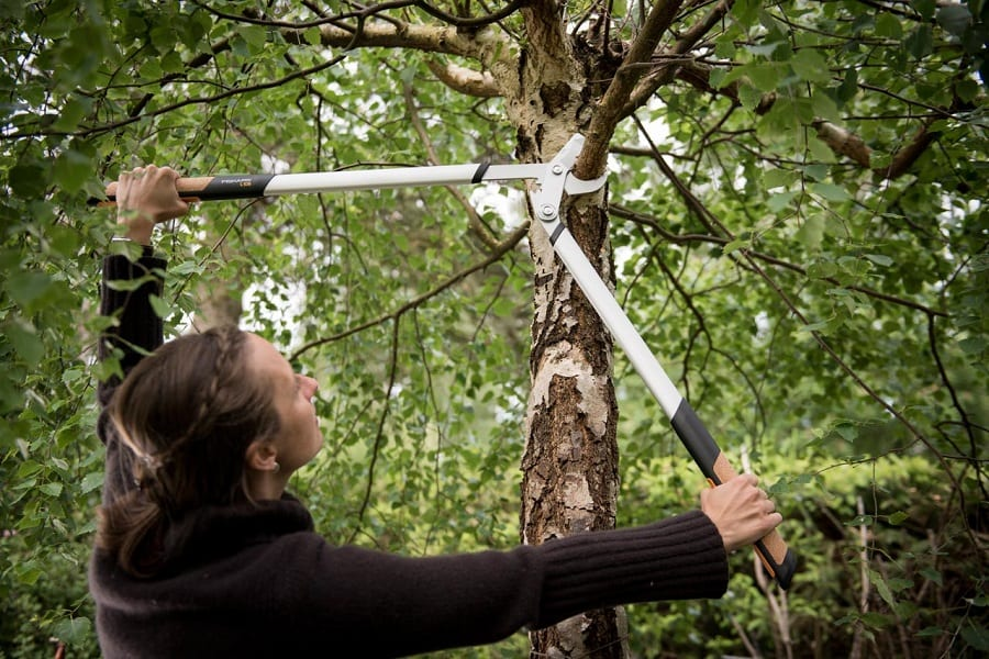 cutting branches with looper