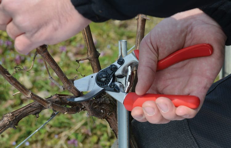 pruning shears for vineyard