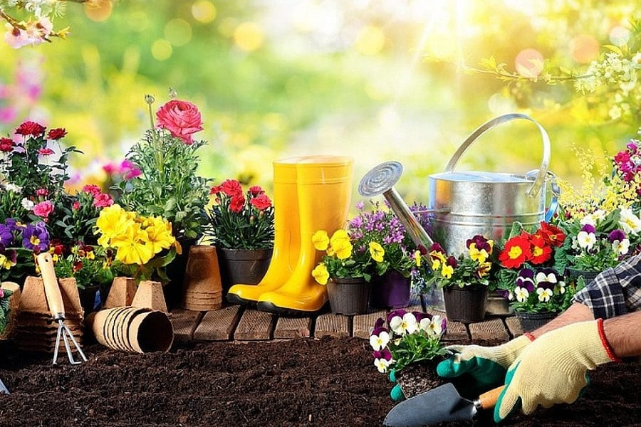 16 Most Common Gardening Questions and Answers