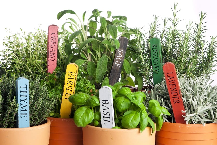 growing herbs in apartment