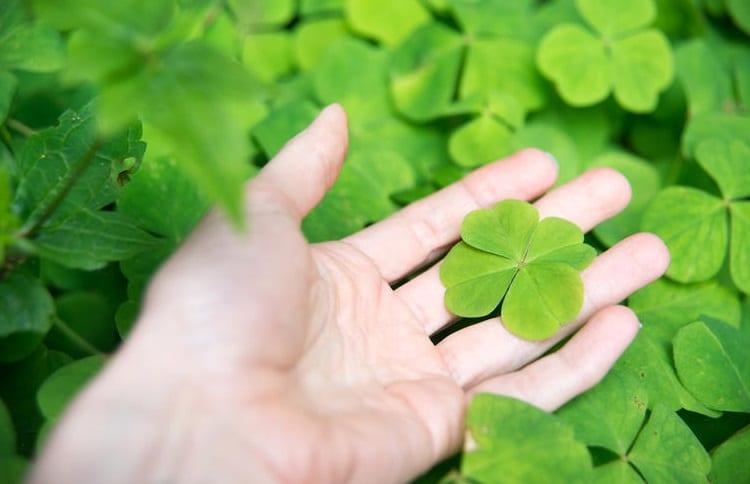 clover with four leaf