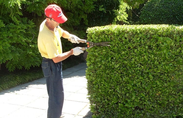 pruning with shears