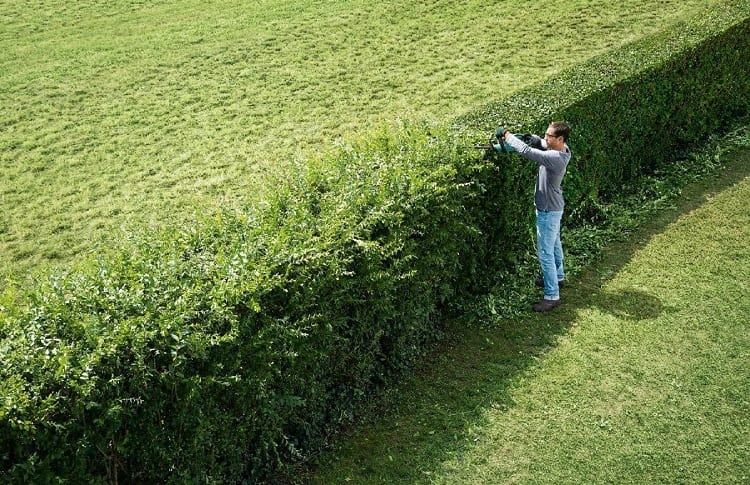 best time to trim hedge