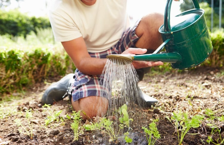 how often should garden be watered