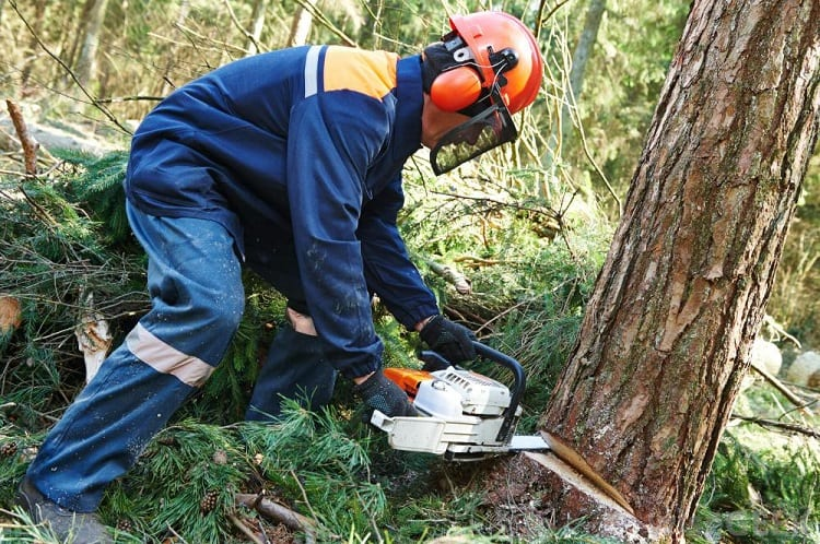 ARE CORDLESS CHAINSAWS ANY GOOD?