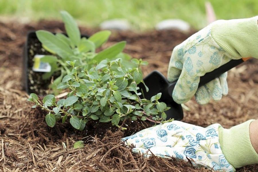 Gardening Gloves Review
