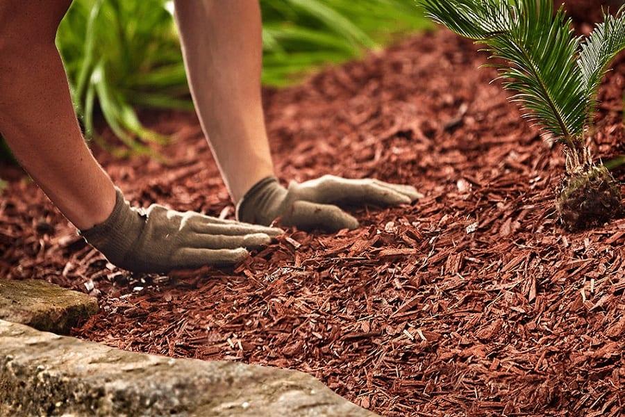 Best Garden Soil Review