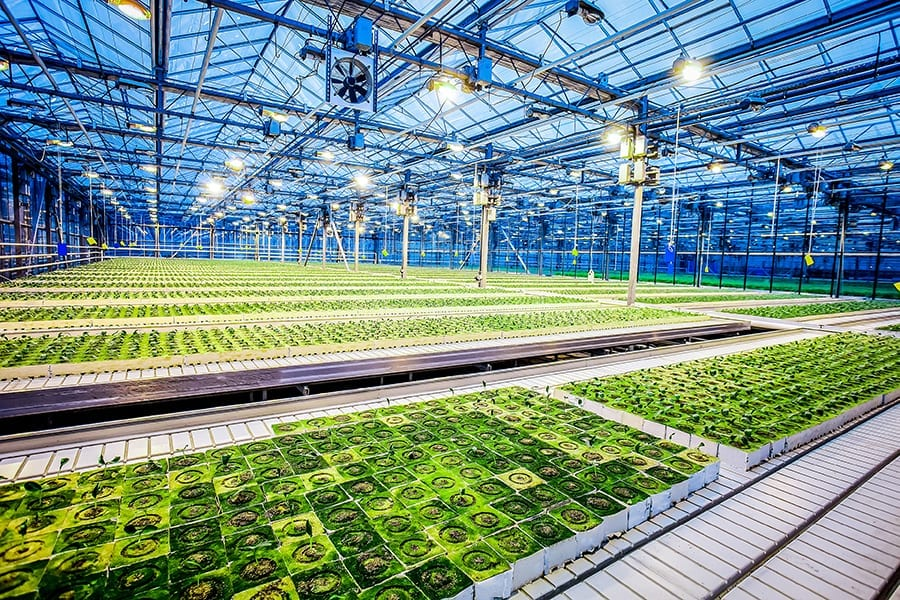 Best Grow Lights for Seedlings Review