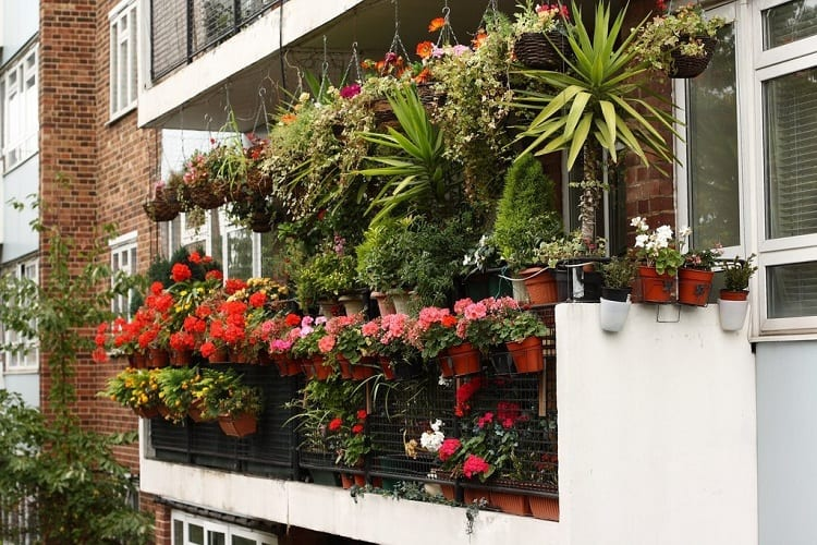 The Ideal Placement of a Balcony Garden
