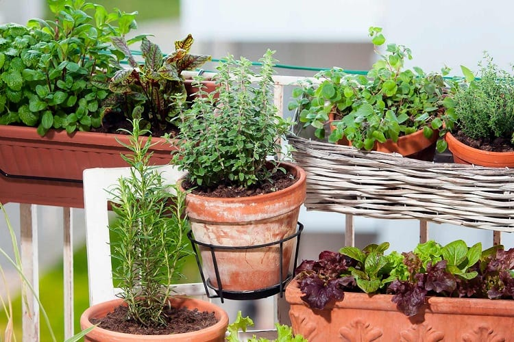 The Best Plants for Balcony Gardening