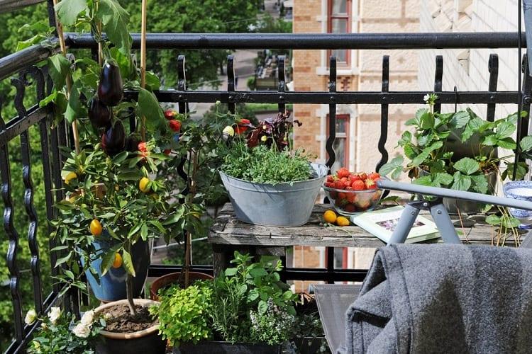Growing Food on Your Balcony