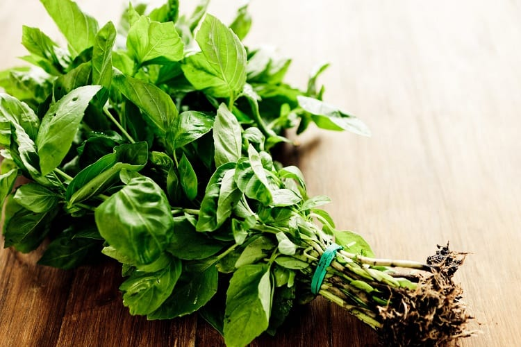 Serious Causes of Basil Wilting
