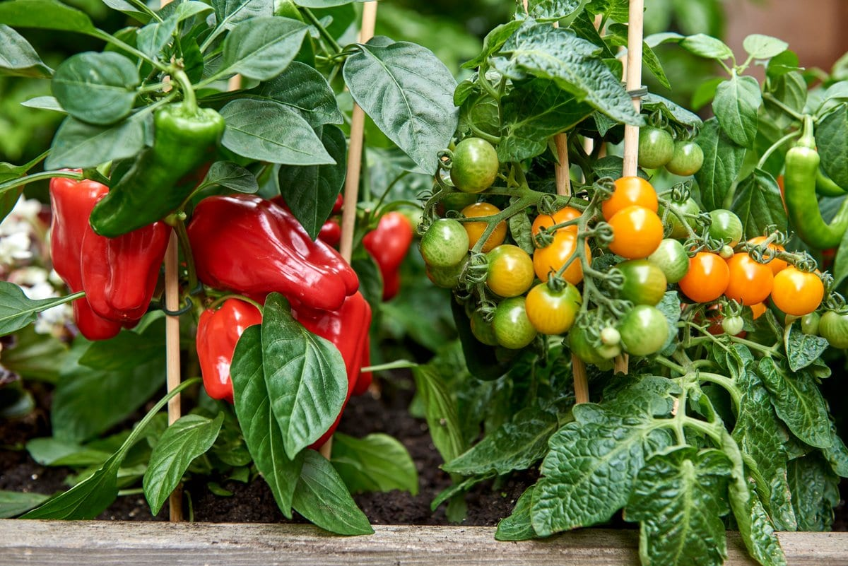 Climbing Vegetables and How to Support Them