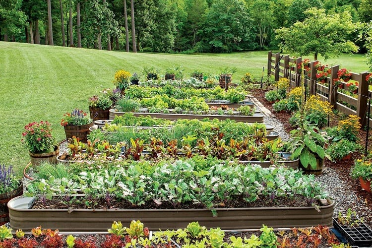 Does the Design of a Vegetable Garden Matter?