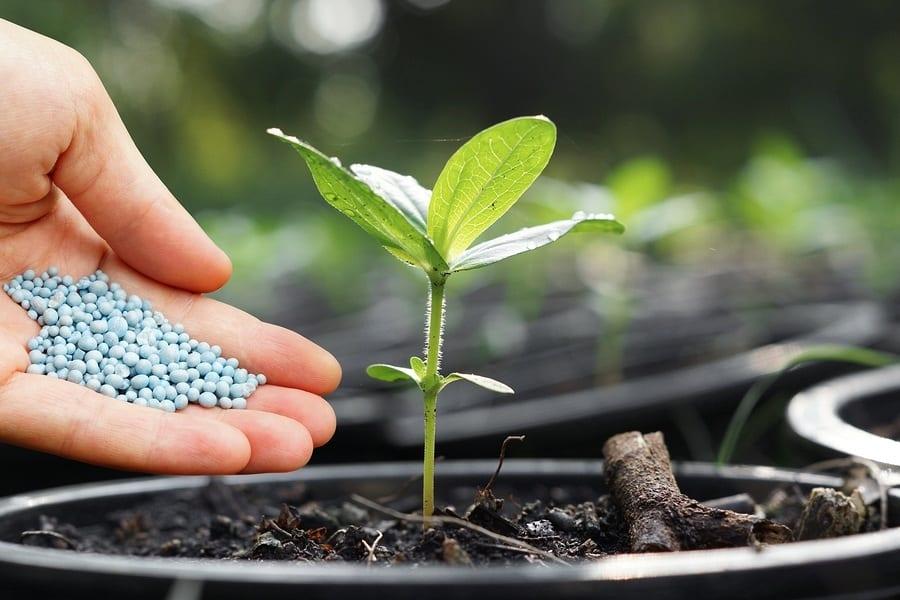 Best Vegetable Fertilizer