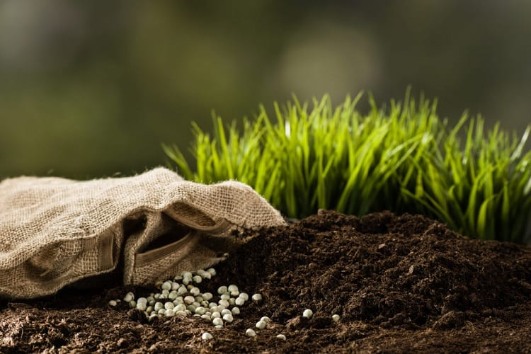 Fertilization Matters