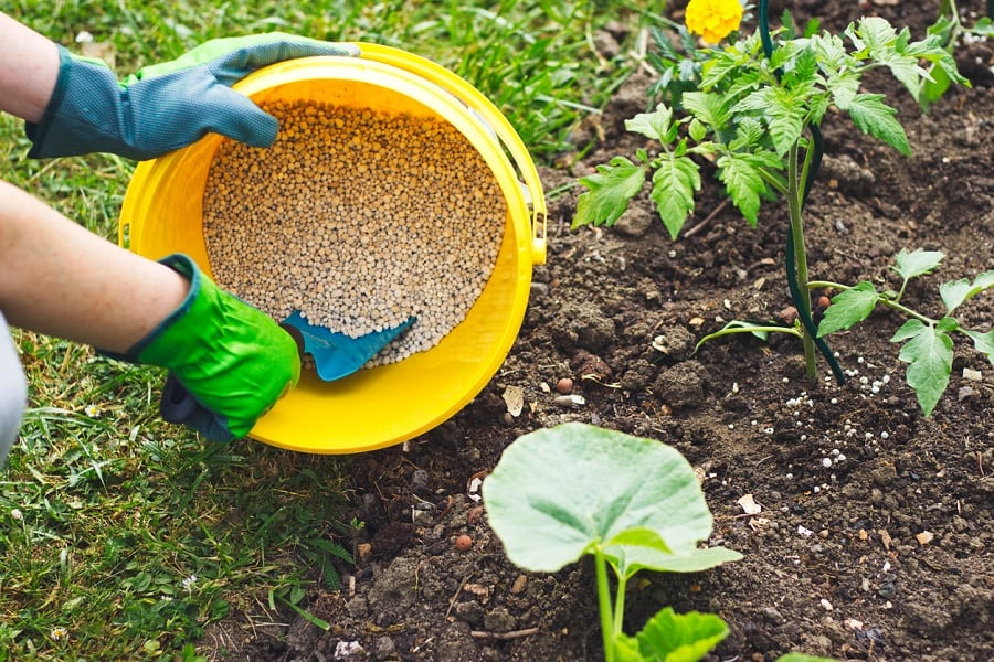 How To Fertilize A Vegetable Garden For Premium Product