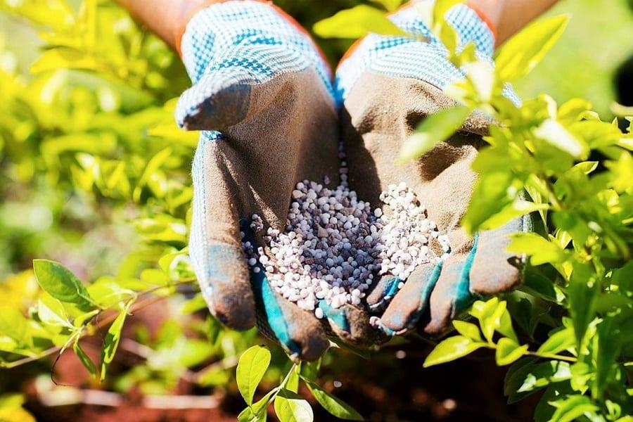 The Importance Of Fertilization In Plants