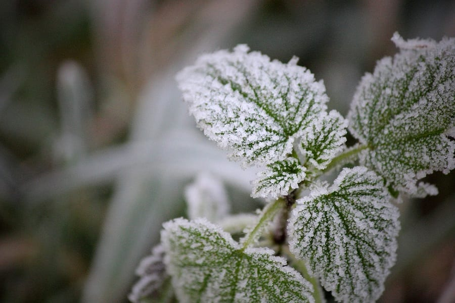 How To Protect Potted Plants From Frost To Survive The Winter