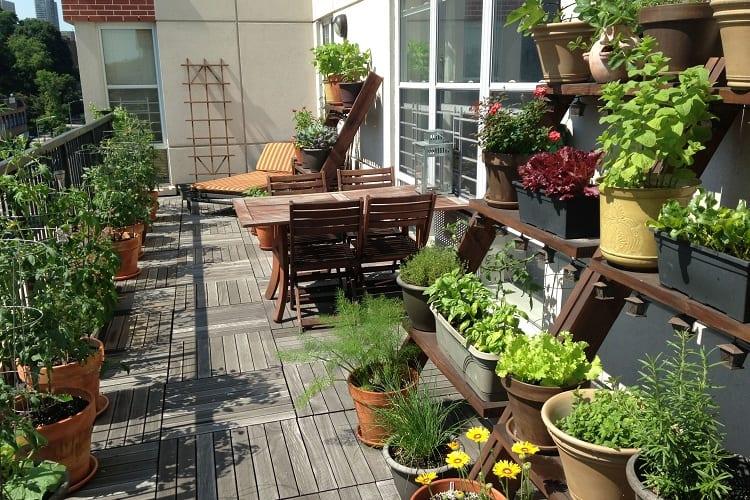 A Bountiful Balcony Garden for All