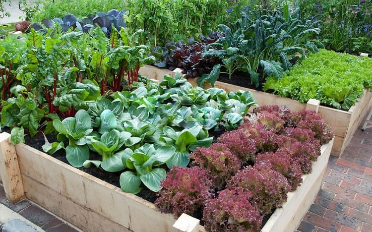 The Types of Shade in Gardening