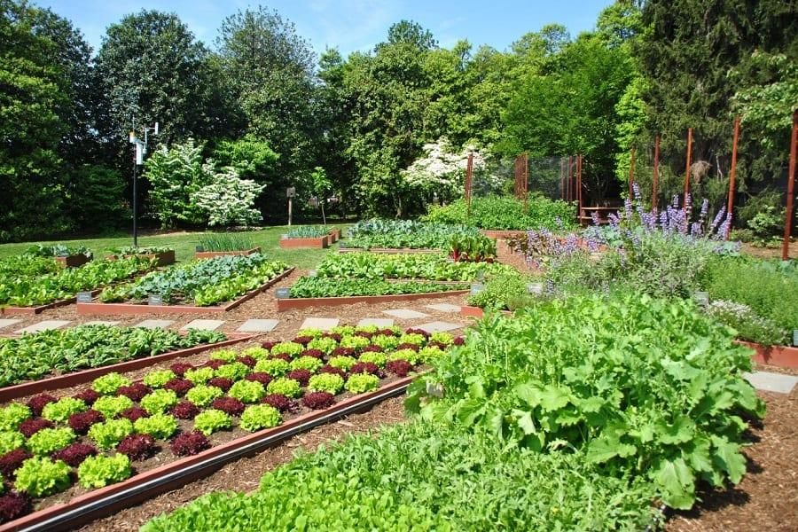 Vegetable Garden Design – More Than Just Aesthetics