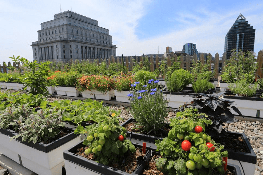 Rooftop Vegetable Gardening: The Beginner's Guide