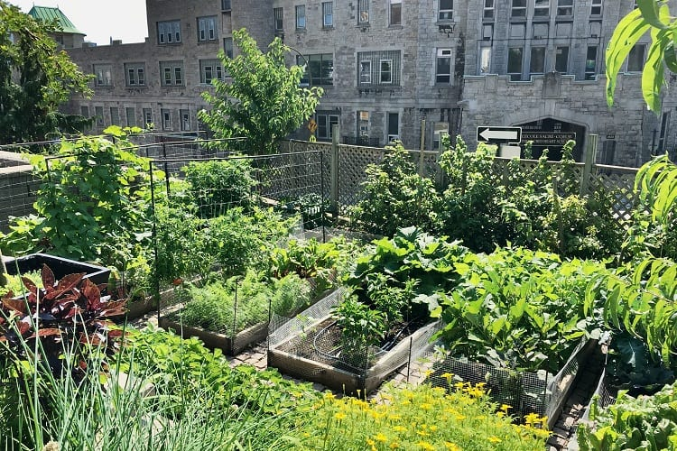 Gardening Laws That Might Apply