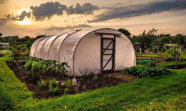 When Should You Use a Greenhouse?