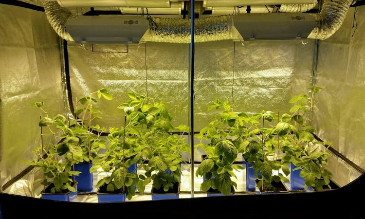 The Requirements for a Grow Tent