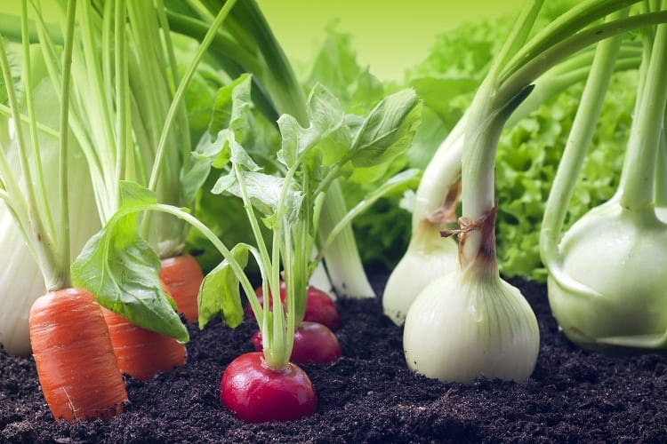 GROWING PERFECT VEGETABLES THE EASY WAY