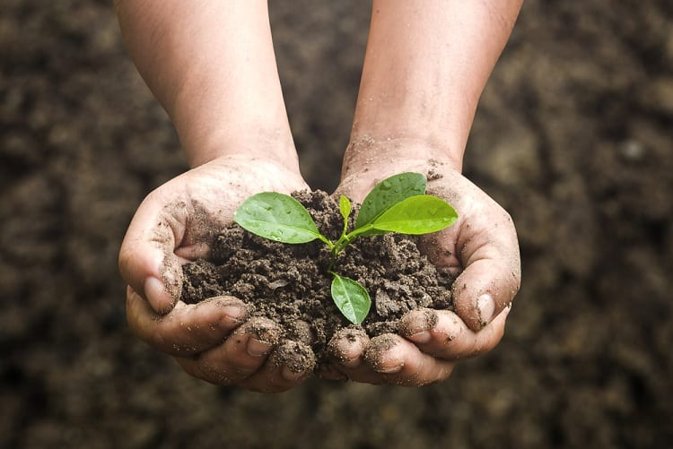 Fertilization for Happy and Healthy Plants