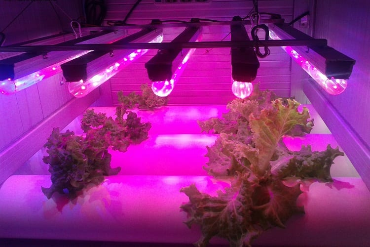 What is a Grow Light?