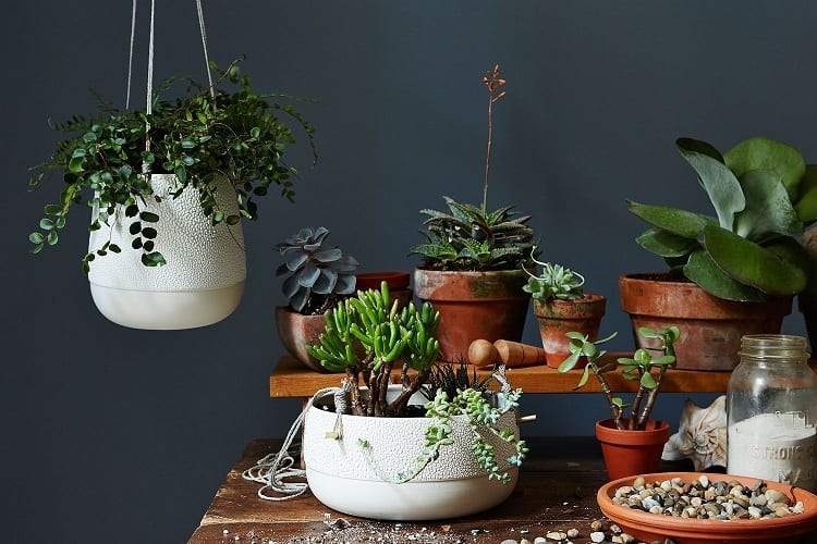 How Long Can Plants Survive on Their Own?
