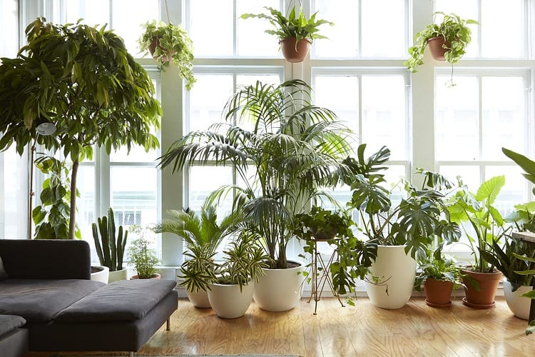 Do My Indoor Plants Need to Die?