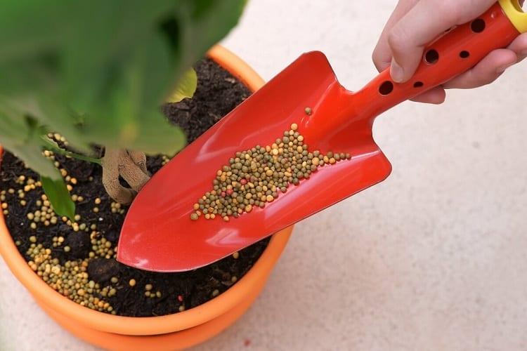 The Best Way to Fertilize Plants
