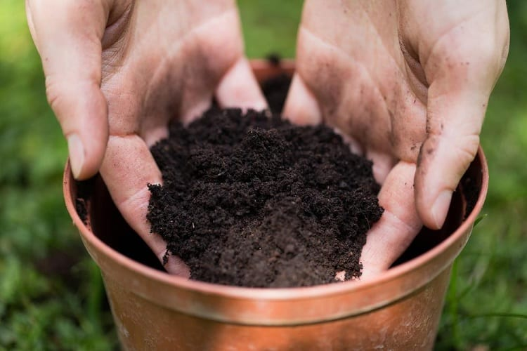 Say Goodbye to Indoor Worms