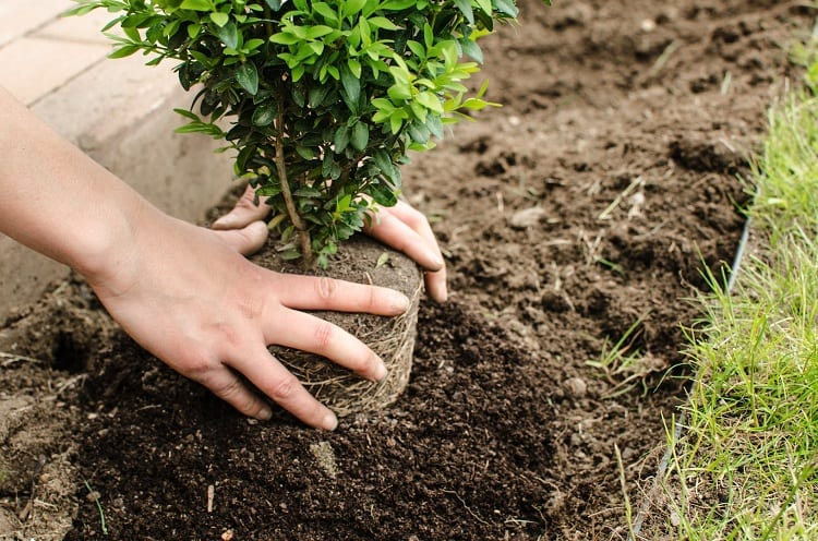 Tips for Stress-Free Transplanting